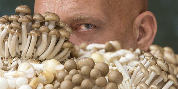Tip van de chef, paddenstoelen